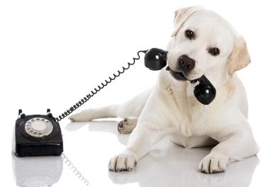 TELEFONO ANIM PNG