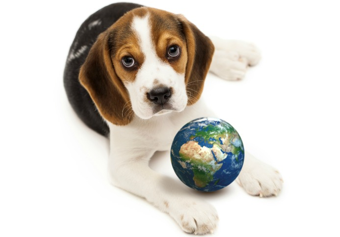 beagle- mondo